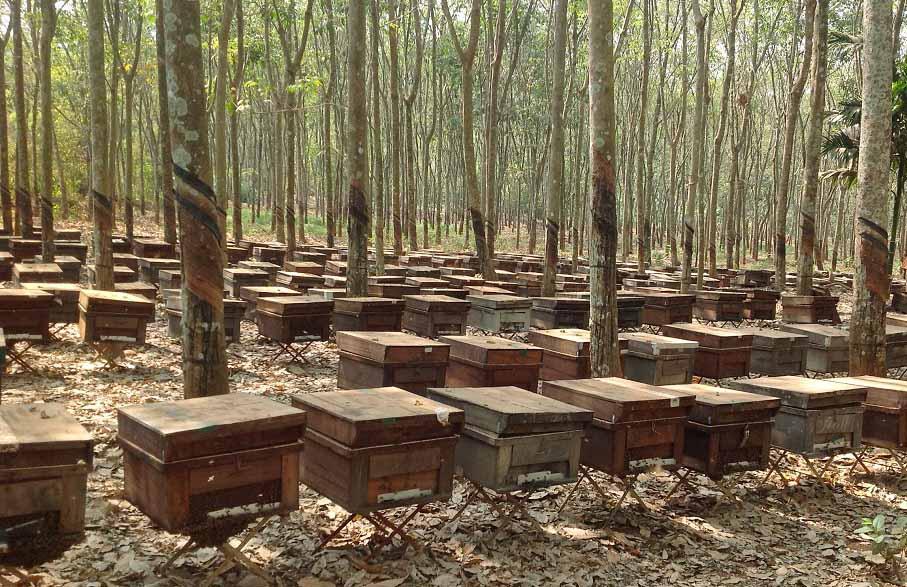 Mật ong nuôi nguyên chất giá bao nhiêu 1lít